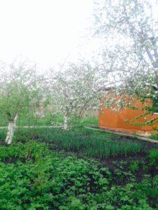 Цветущий сад - условия пребывания