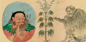В древности колдуны курили гашиш (бошки и шишки) фото