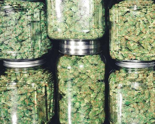 купите марихуану, вред долгого употребления шишек, симптомы и последствия бошек