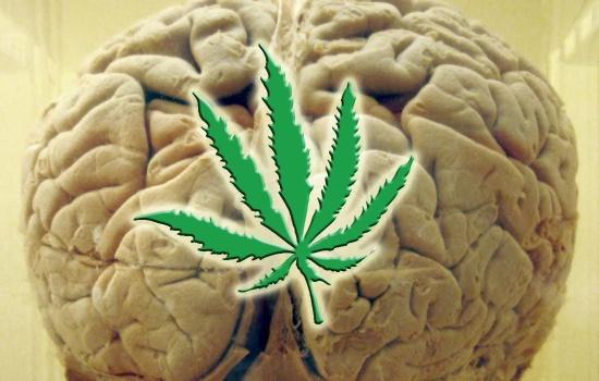 где купить бошки марихуаны, симптом долгих последствий вреда